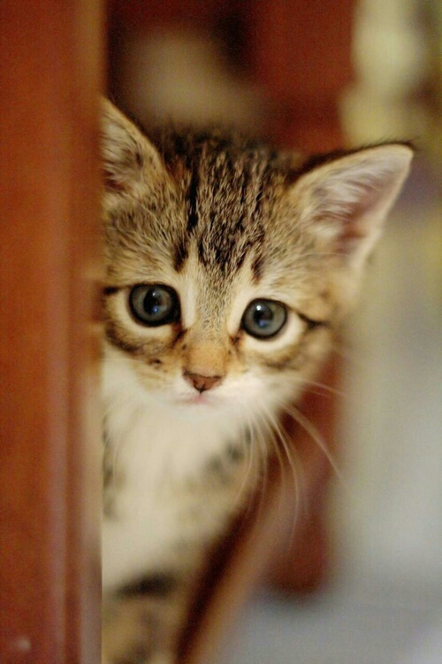 ♥مكتبة صور قـطط♥ - صفحة 73 -صور-قطط-14