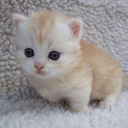 ♥مكتبة صور قـطط♥ - صفحة 75 -صور-قطط-15
