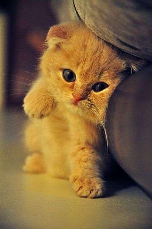 ♥مكتبة صور قـطط♥ - صفحة 75 -صور-قطط-21