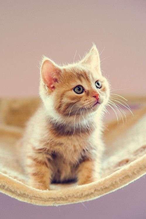 ♥مكتبة صور قـطط♥ - صفحة 75 -صور-قطط-23