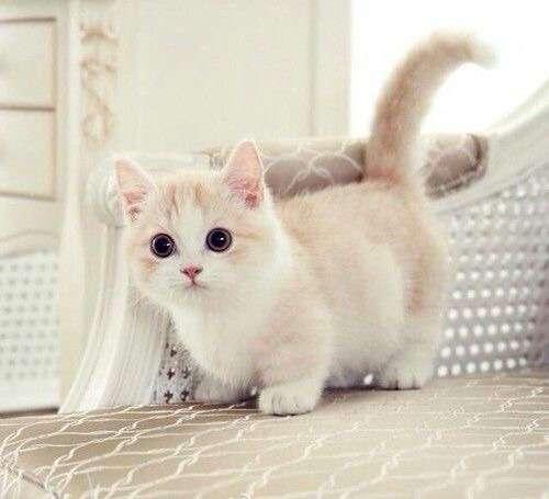 ♥مكتبة صور قـطط♥ - صفحة 75 -صور-قطط-30