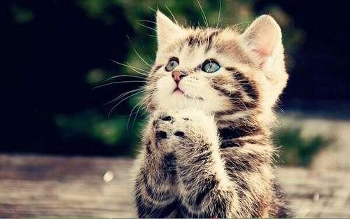 ♥مكتبة صور قـطط♥ - صفحة 75 -صور-قطط-34