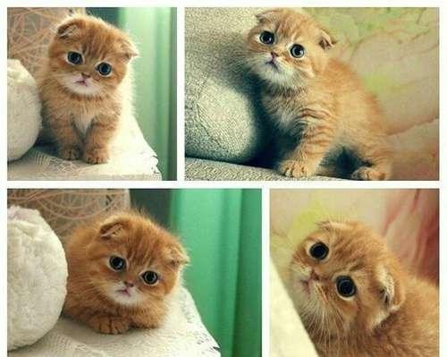 ♥مكتبة صور قـطط♥ - صفحة 75 -صور-قطط-43