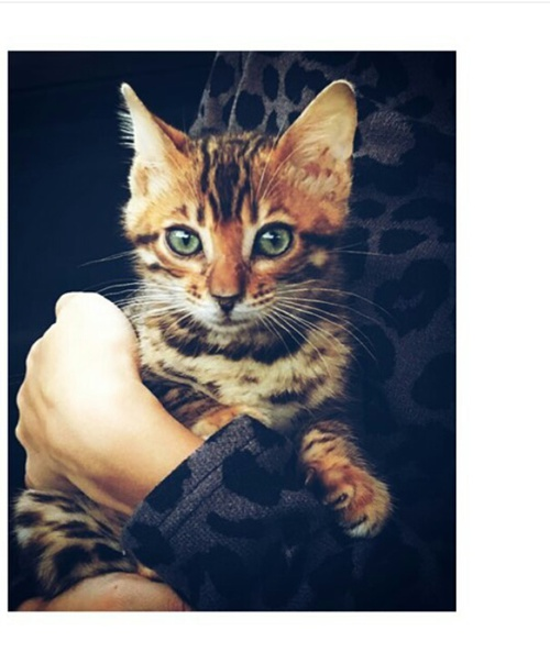 ♥مكتبة صور قـطط♥ - صفحة 75 -صور-قطط-45