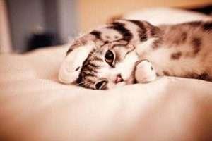 صور حب قطة