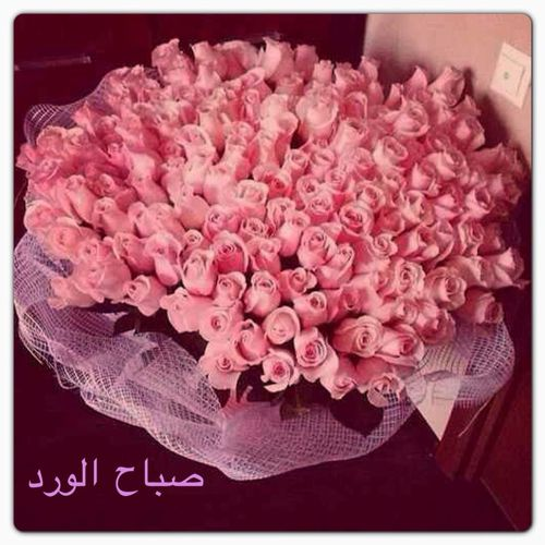 صورة صباح الورد والياسمين مكتوبة علي صور حلوة