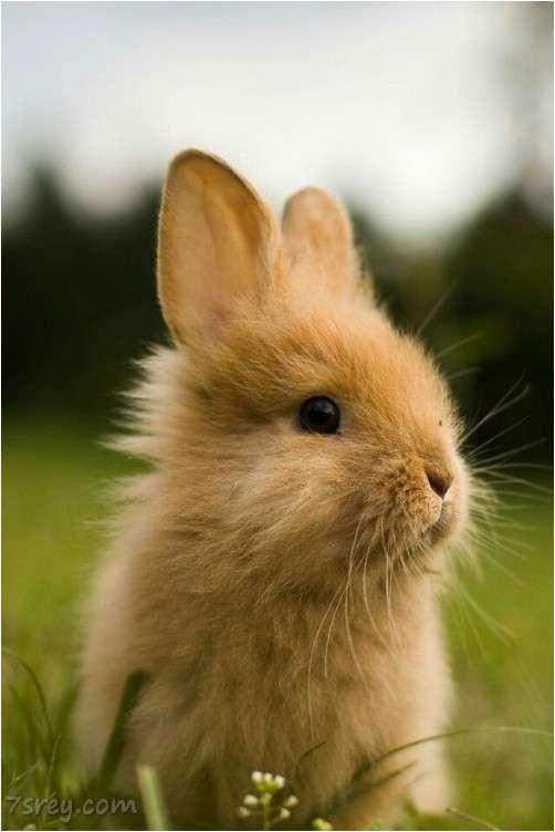 صورة صور ارانب جميلة , احلي صور ارانب كيوت , خلفيات ارانب رائعة