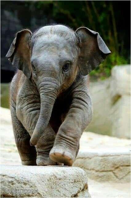 صورة صور الفيل , أجمل صور أفيال , خلفيات ورسومات فيل جميلة جدا