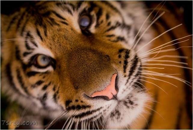 صور نمر