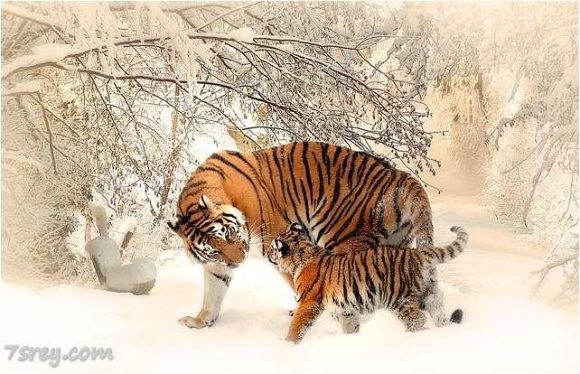 صور نمر صغير
