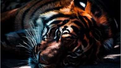 صور نمر جميلة