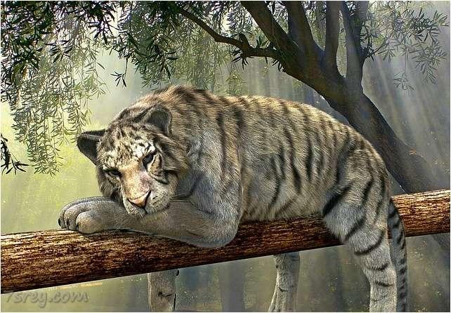خلفيات نمر جميلة
