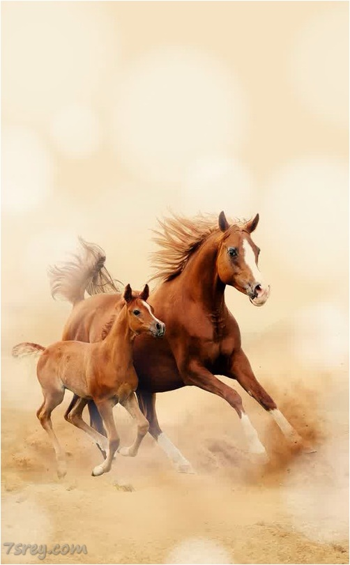 خلفيات خيول