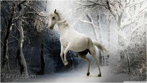 صور خيول في الثلج