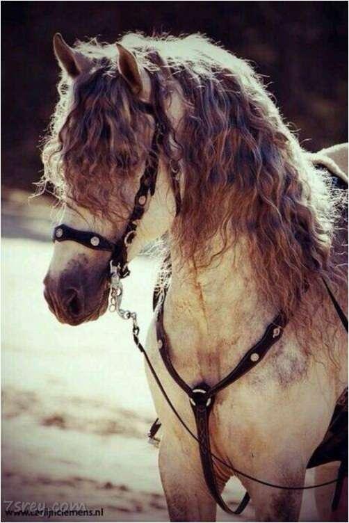 صور خيول