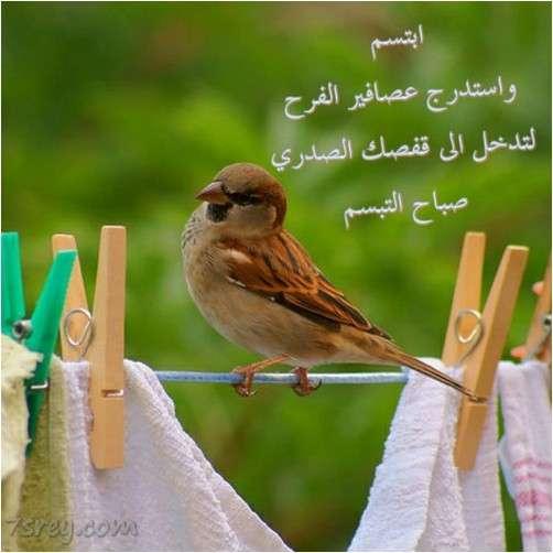 صور عصافير