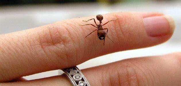 اضرار قرصة النملة وطرق العلاج منها موقع حصرى