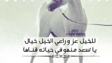 مدح فارس الخيل موقع حصرى