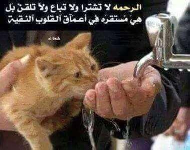 صورة حكم عن الرحمة , اقوال عن الرحمة والمغفرة والمسامحة