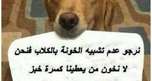 حكم عن الكلاب الوفية