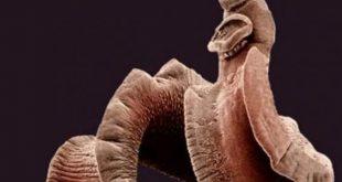 اين تعيش الديدان الطفيلية الشريطية