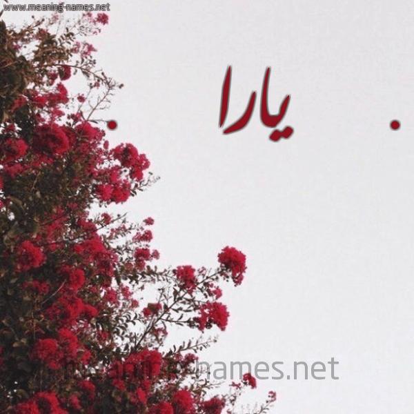صور وخلفيات مكتوب عليها اسم يارا (6)