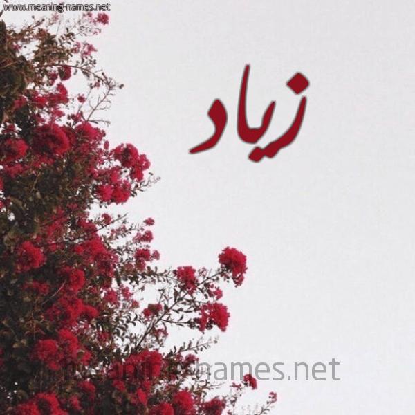 معنى أسم زياد صور مكتوب عليها اسم زياد موقع حصرى