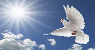 مقدمة عن السلام