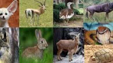 صورة الحيوانات المهددة بالانقراض في المملكة
