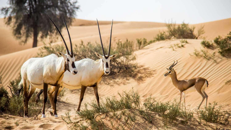 الحيوانات المهددة بالانقراض في المملكة موقع حصرى